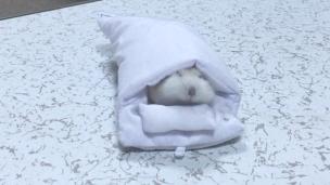 hamster-futon