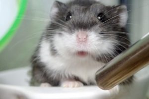 hamster-pid-color