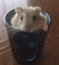 hamster-cup1