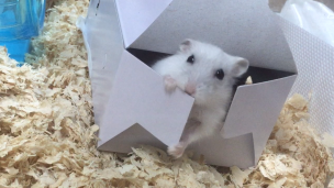 hamster-boxed-leave