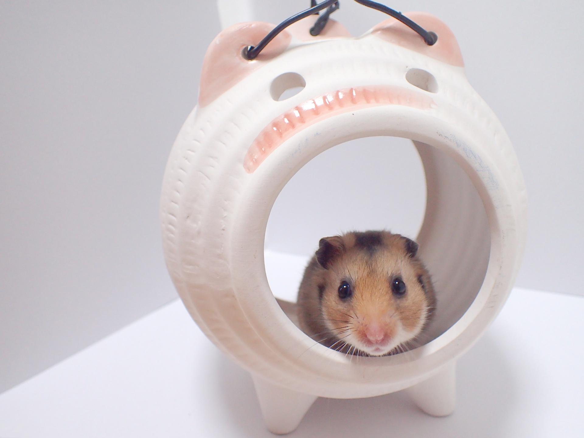 pottery-hamster