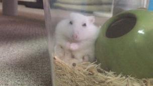 hamster-relax