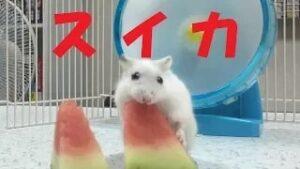 watermelon-movie