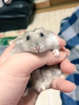 hamster-his-back