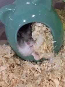 cold-sleeping-hamster