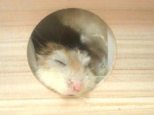 hamster-death2