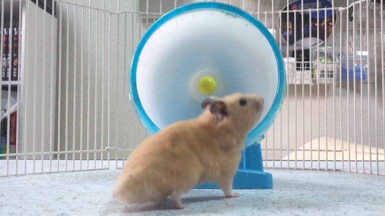 noisy-night-hamster