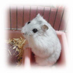 hamster-potty- training