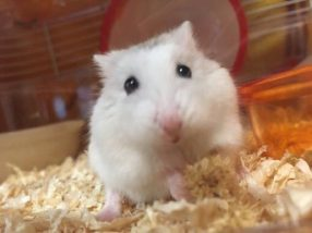 cry-hamster