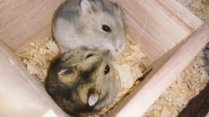 cry-hamsters