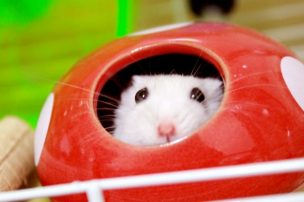 stinking-hamster