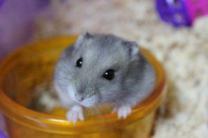 stinking-hamster2