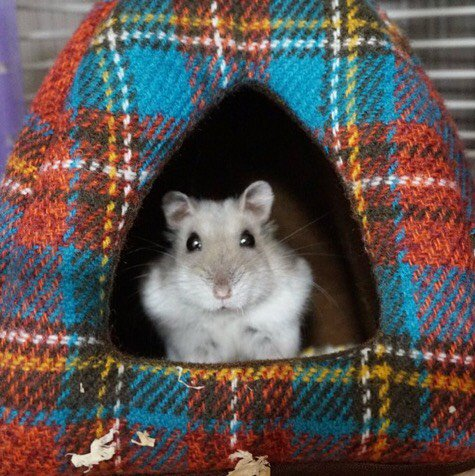 travel-hamster