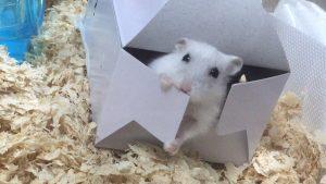 travel-hamster2
