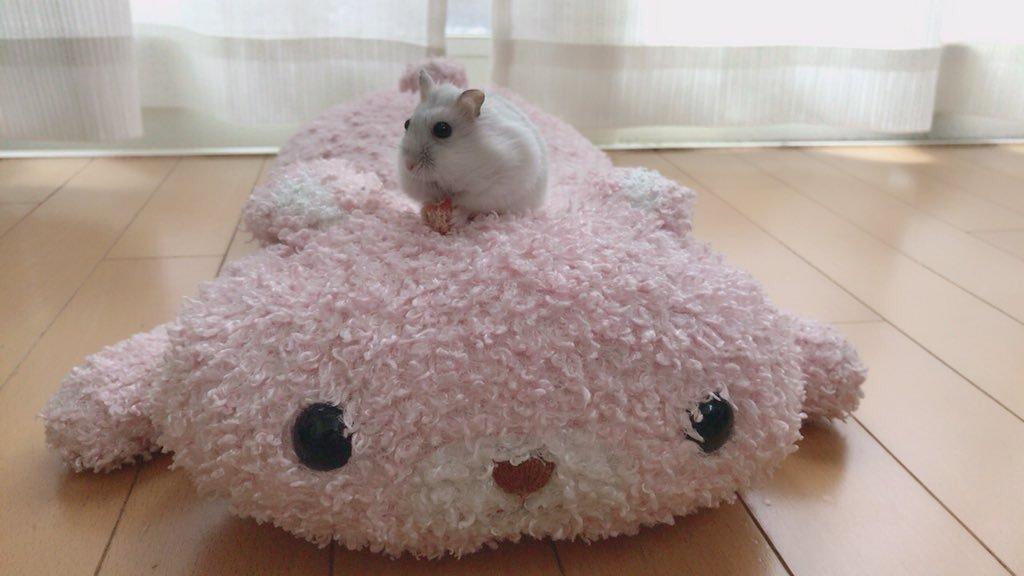 walk-hamster1