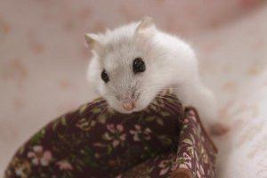 walk-hamster2