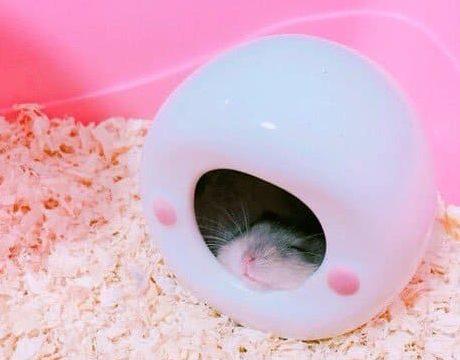 old-hamster