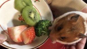 hamuster-eat-roccoli-7