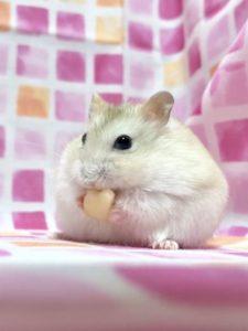 hamster-eat-tofu2