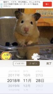 hamster-app