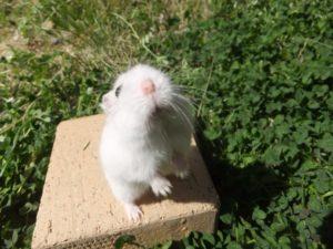 hamster-freeze-2