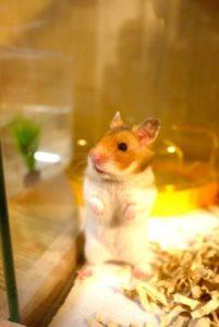 hamster-freeze-3