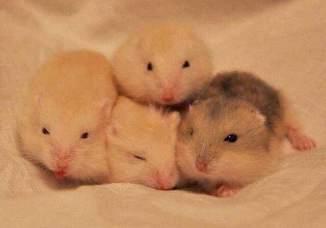 kids-hamster