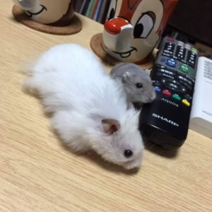 brother-hamster
