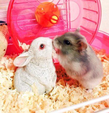 rabbit&hamster