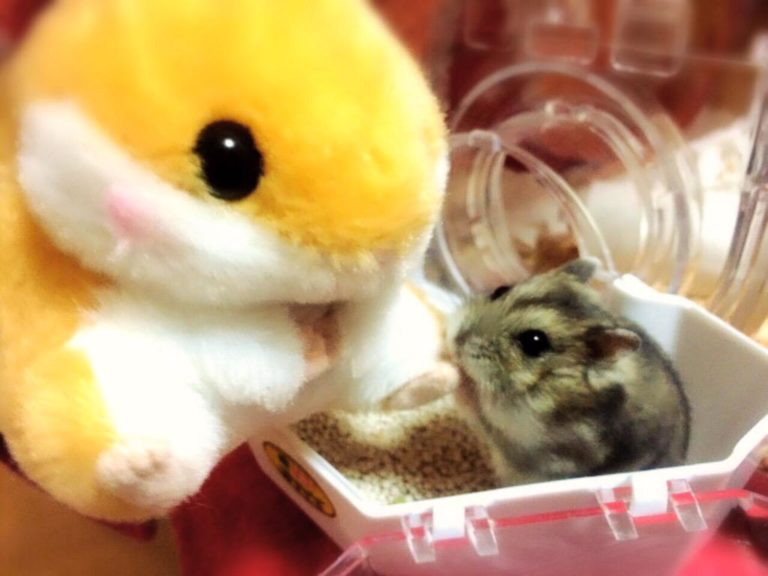 hamster-and-stuffed-animal