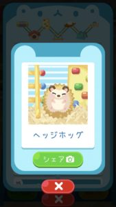 animal11