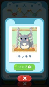 animal13