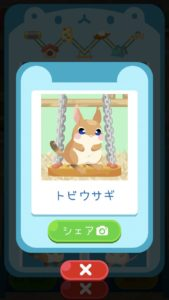 animal23