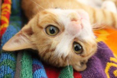 猫にマグロの刺身を与える方法!生・茹でる・たたきのどれが最適?