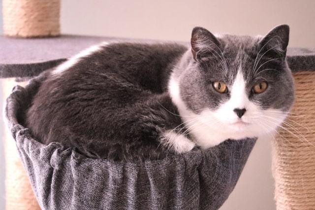 fat-cat1