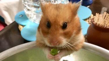 ハムスターの枝豆の与え方!ゆでるのと生どちらが良い?皮は食べれる?