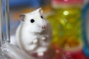 shivering-hamster-2
