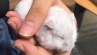 sleeping-hamster-1