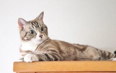 猫のトイレのしつけ!トイレを覚えさせる4つのコツと粗相時の対処!