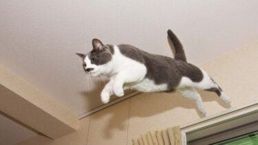 猫の運動会!対策と原因、夜中から朝まで終わらない時に止める方法!