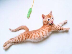 cat-jump2