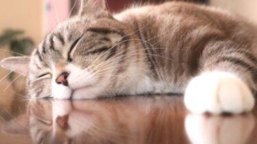 猫の暑さ対策グッズ15選!100均を活用して手作りクーラー!