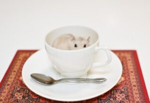 hamster-in-the-cup