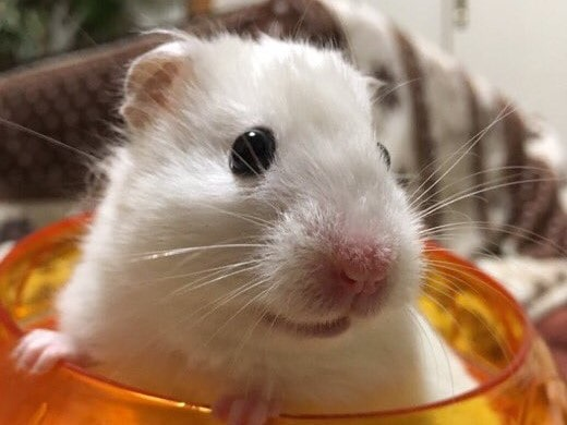 hamster-hiccup
